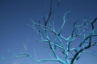 Un arbre bleu aux branches nues.