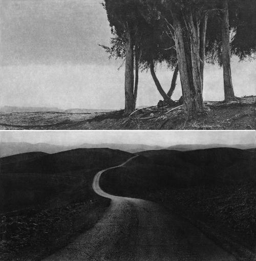 En haut, quelques arbres secs sur un ciel vide. En bas, une route déserte.